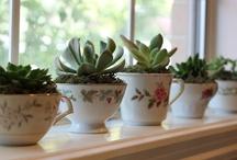 Plantas, jardins e arranjos