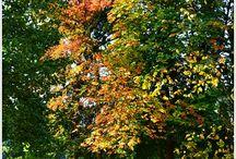 Traumzeitmomente - Herbst