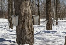 Maple Sugaring - How Sweet It Is!