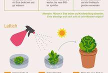 Pflanzen + Pflanzenkunde