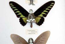 Butterflies / by Tamar DeJong