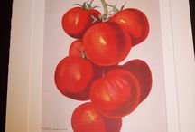 Food and Drink Prints / Antique Prints of Edibles