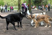 Wybiegi dla psów