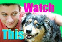 Dog training videos / by Tina