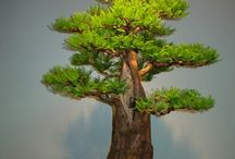 Did I mention I love Bonsai? / I don't have nearly enough time to start a hobby like this, but I love seeing them nonetheless.
