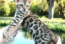 animals / wild lifes