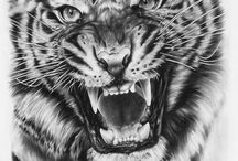 Tigers / My favorite Tigers