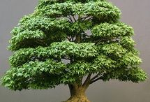 Bonsaï world / Tiny beautiful Japanese trees