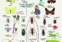creative biology