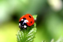 Bugs! / In Britain there are at least 30,000 different species of invertebrate. This is many more than all the different sorts of plants, fungi, birds and mammals combined. However, most invertebrates are small (hence 'mini-beast') and live unnoticed in the countryside.