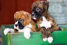 Boxers <3