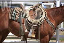 Ranching Photos