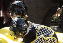Tompkins Square Park Halloween Dog Parade 2014