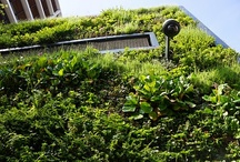 Green Walls / Some of my favourite green walls - Some of these walls are designed by me (Mark Laurence).