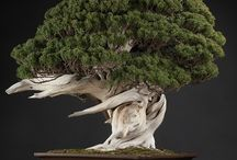 Bonsai ♥ / I don't know why, but I really love them! They are beautiful, right? ♥