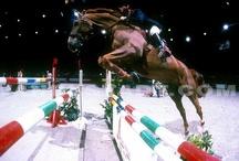 Horses & Equestrian Sports