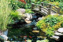 Pond / Fish