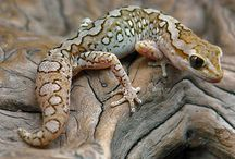 Reptiles, Amphibians & The Like / Reptiles, Amphibians & The Like
