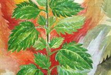 Kasvit, maalaus