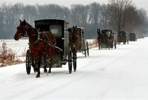 all things amish / by Karen Bower