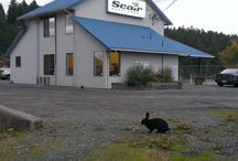 Seair Seaplanes Nanaimo Base / Our terminal is located at 1956 Zorkin Rd in Nanaimo, BC