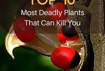 Dangerous herbs and Plants