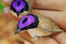 Cool Birds / Unusually coloured or looking bird species
