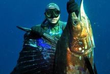 Spearfishing Mozambique / Magical Mozambique is still one of the best places on the planet to spearfish.