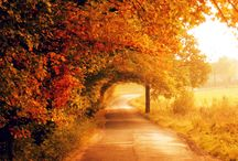 Autumn / Some great, cost saving and innovative ideas, inspired by the best bits of autumn.