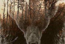 Animal and nature