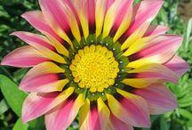 Blumen zart die Schönheit  nach außen neigen