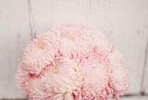 Blooms - Mums