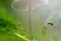 Nature / Inspiring