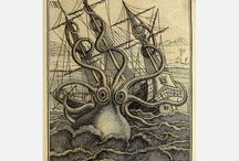 Illustration - Zoology / by jules knowlton