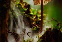 loodus