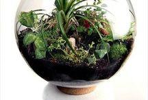 planter til rommet