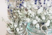 Levander and baby's breath