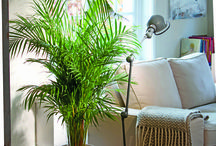 Planter som renser luften