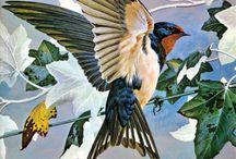 Aves de Nuestro Paraiso