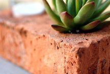 Creative ways to grow succulents