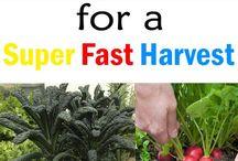 GARDEN-fast veges