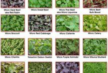my micro greens