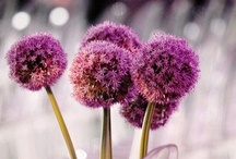 purple weddings / by Saundra Hadley