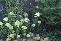 Flowers, plants & tuin