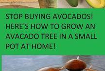 Avo-Tree DIY