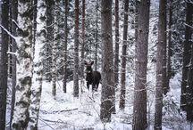 RENCONTRES | INTO THE WILD