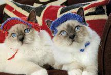 Cats / Cat Videos
