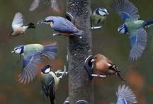 Bird feeder  ♡♥♡❤ / Pleas, feeds the birds!