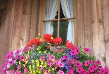 Beautiful Window Gardens / by Claudia