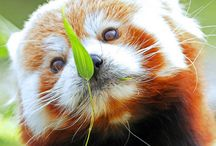 Animals / Photos of animals - wild and tame